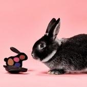 It's bunny season 🐰 . . . #Bellacosmetics #beauty #makeupaddict #cosmeticsbrands #shoponline #bellagirls #revolutionmakeup #iheartrevolution #bunnystardust #eyeshadowpalette #cute #love #eyelook #eyemakeup #mua #makeupartist #skgshops #thessaloniki #shoppingtime